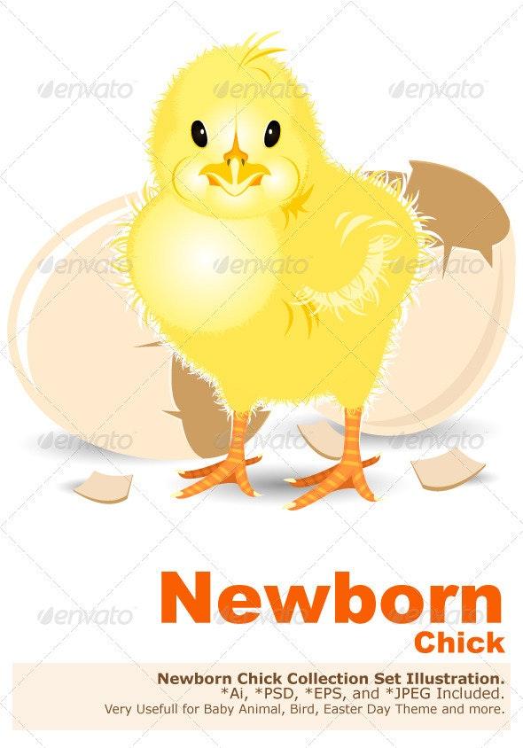 Newborn Chick - Animals Characters