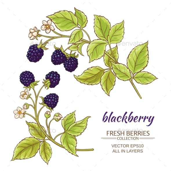Blackberry Vector Set