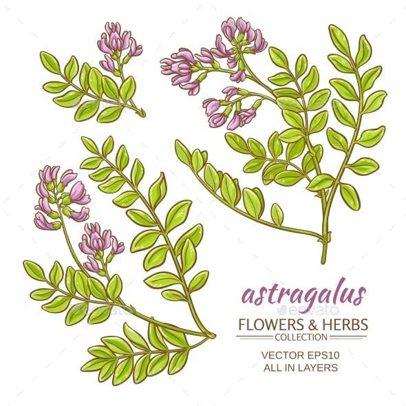 Astragalus Vector Set