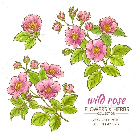 Dog Rose Flowers Vector Set