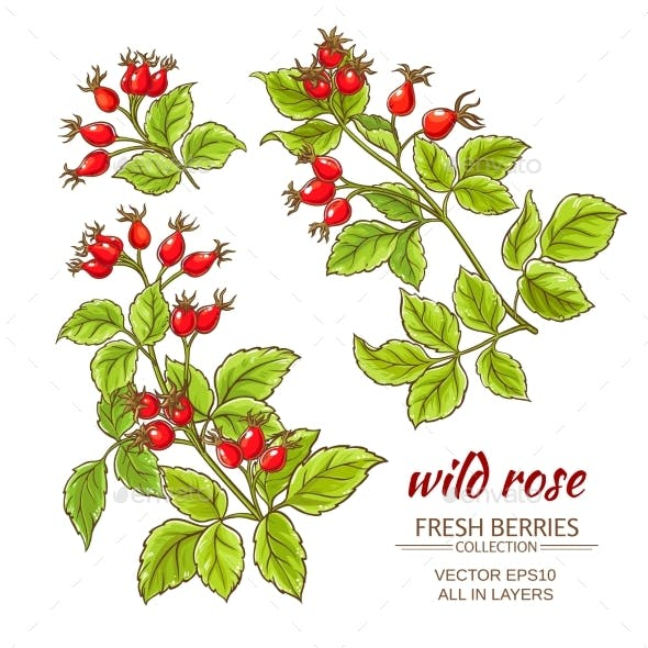 Dog Rose Hips Vector Set