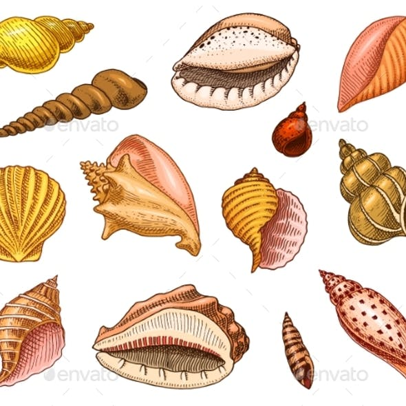 Seashells or Mollusks Different Forms