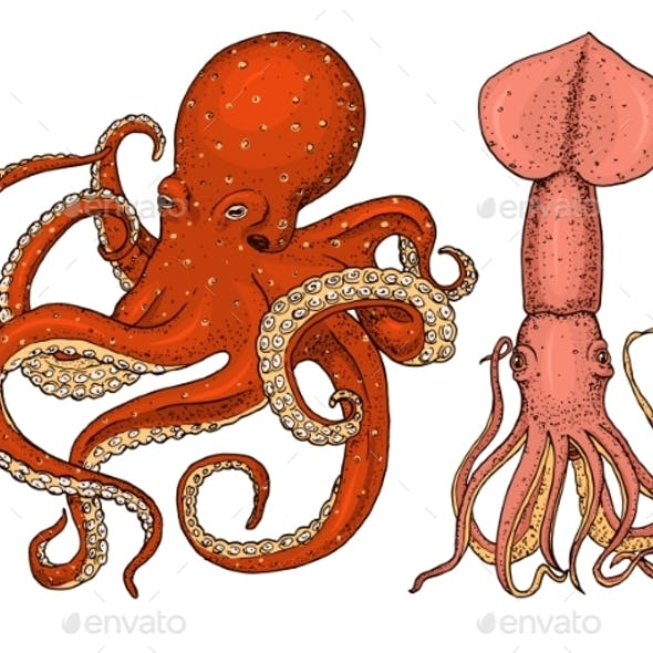 Sea Creature Octopus and Squid