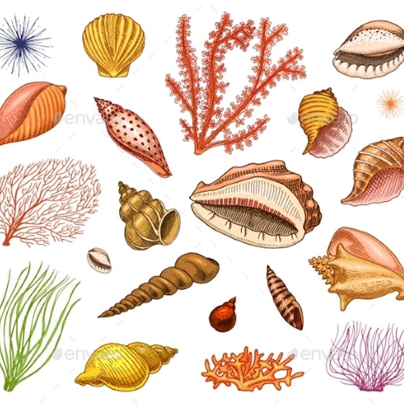 Seashells Set or Mollusca Different Forms