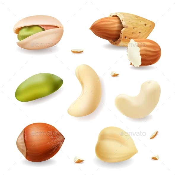 Nuts Realistic Vector Set Isolated