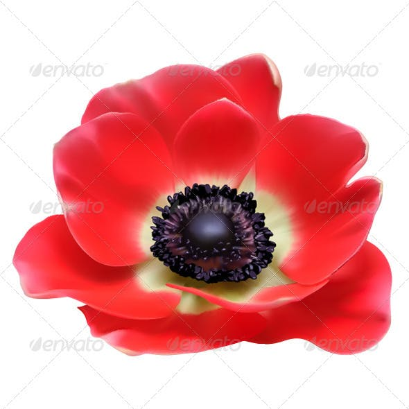 Red Flower Vector Illustration