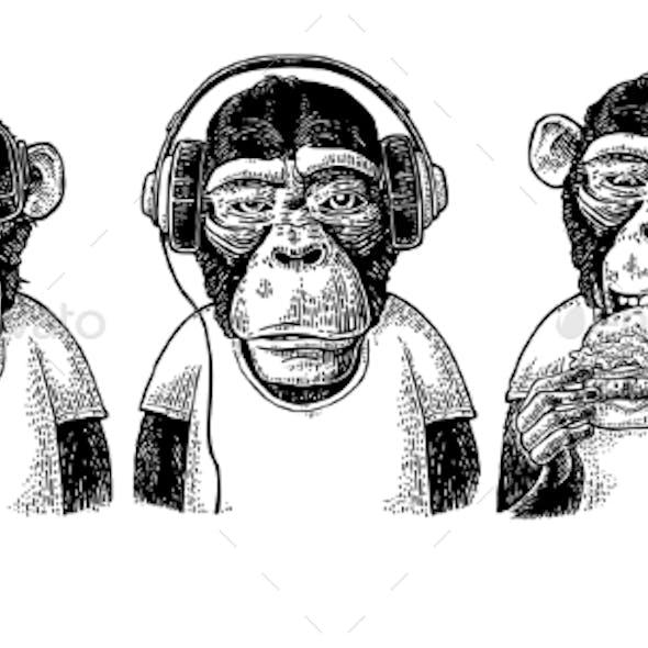Three Wise Monkeys Not See Not Hear Not Speak