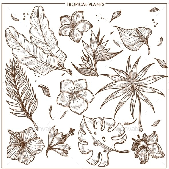 Tropical Plants and Exotic Flowers Sketch Vector