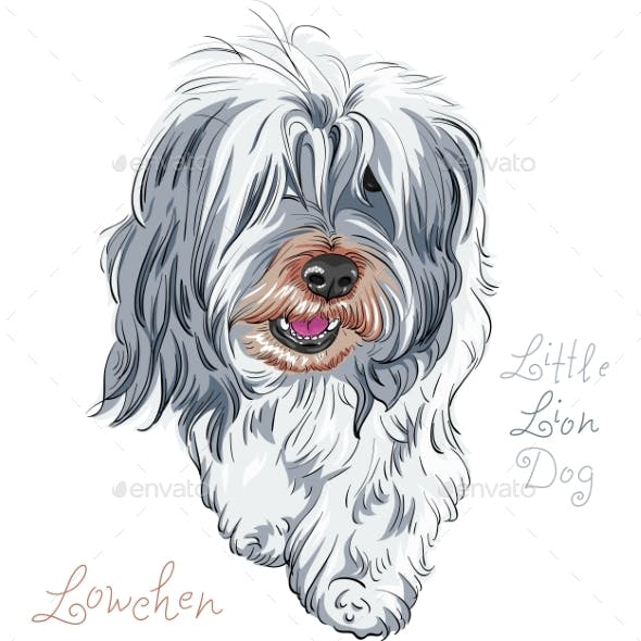 Vector Dog Breed Lowchen