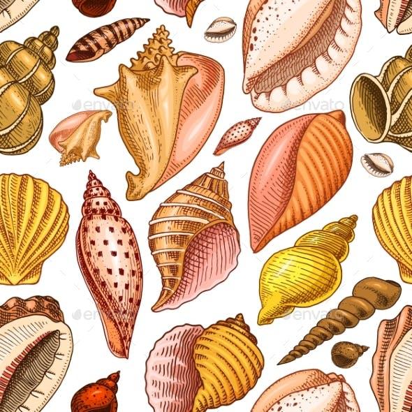 Seamless Pattern of Shells