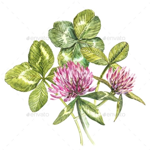 A Composition of Clover Red Flowers and Leaves - a