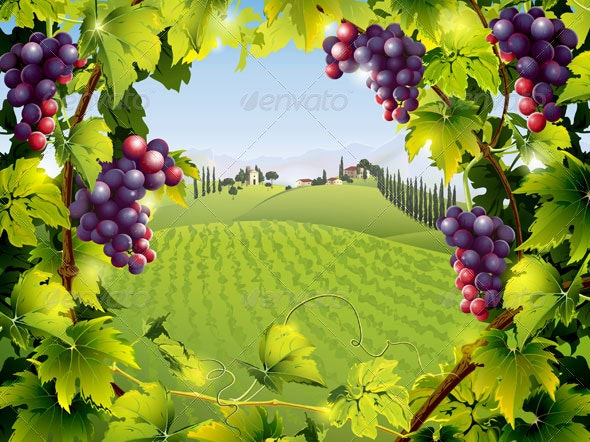 Tuscany Landscape with Grape Vines and Fields - Landscapes Nature
