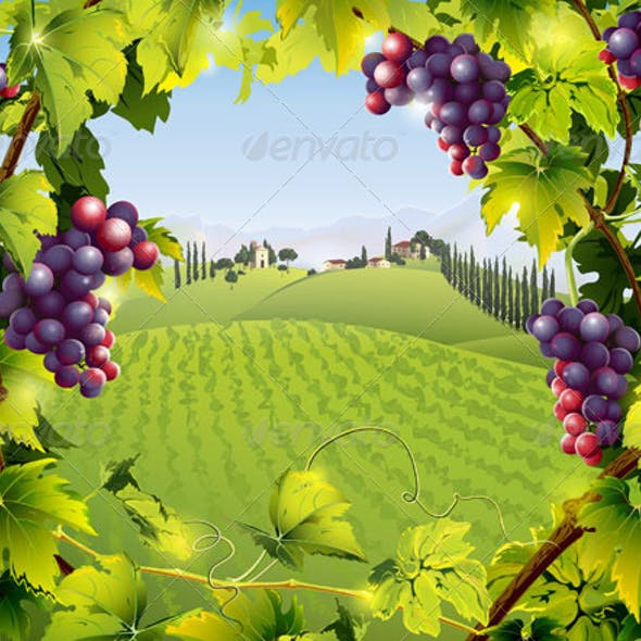 Tuscany Landscape with Grape Vines and Fields
