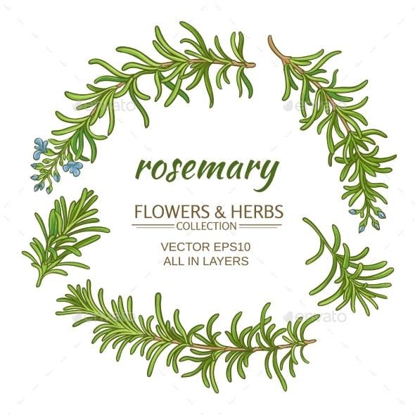 Rosemary Vector Set