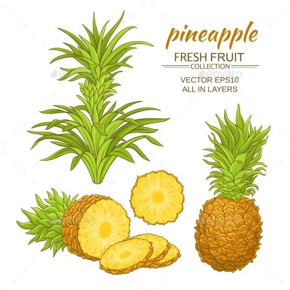 Pineapple Vector Set