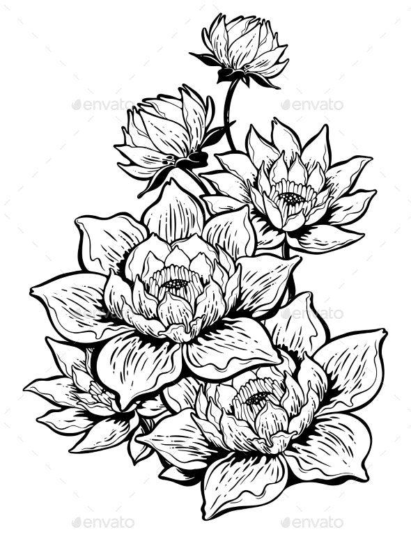 Lotus Lily Flower In Bloom By Phoenixneon Graphicriver