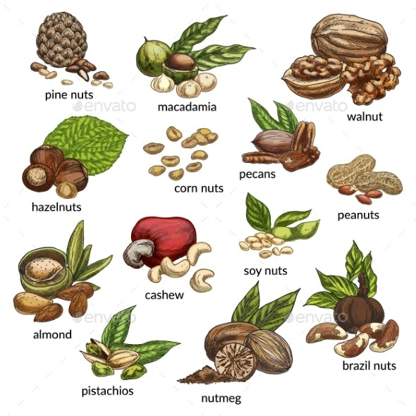 Set of Isolated Different Nut Types