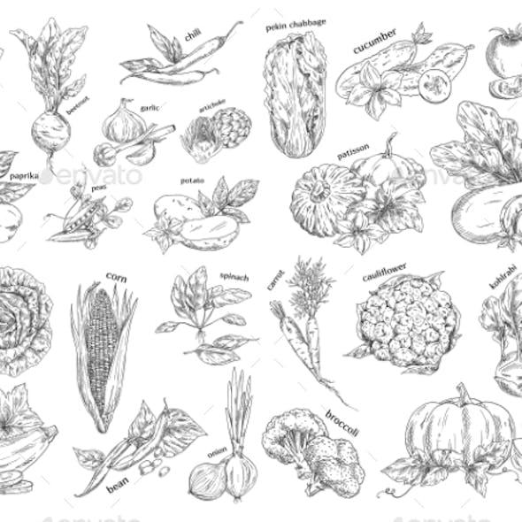 Sketch of Vegetarian Food
