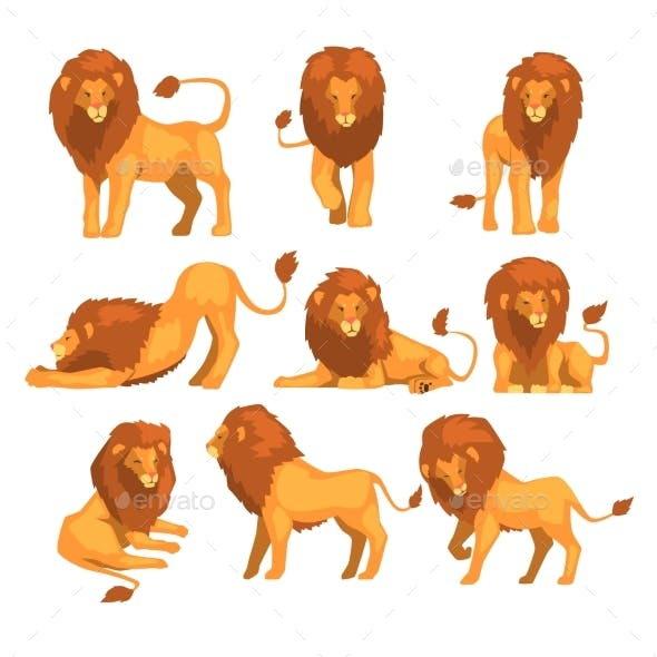 Proud Powerful Lion Character in Different Actions
