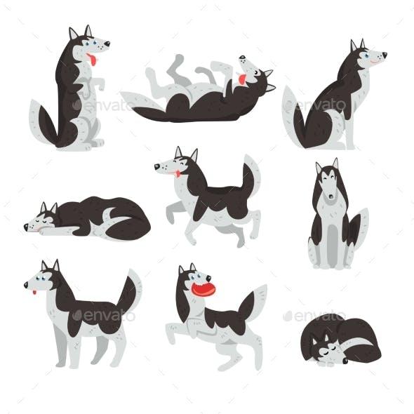 Siberian Husky Character Sett