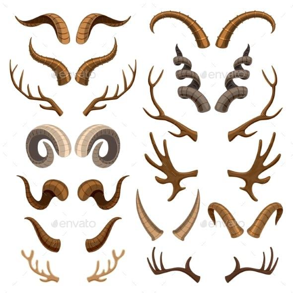 Horn Vectors
