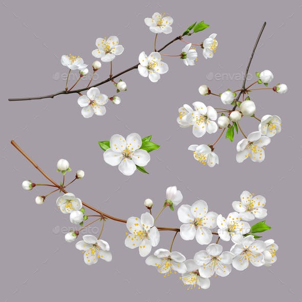 Blossoming Tree Branches Spring flowers
