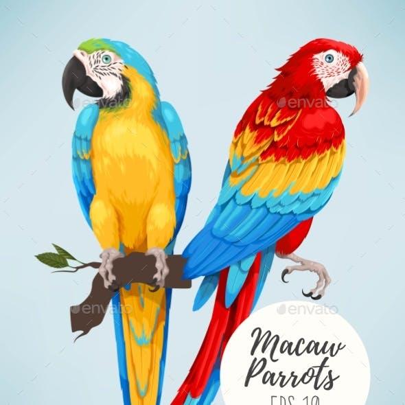 Tropical Parrots Collection