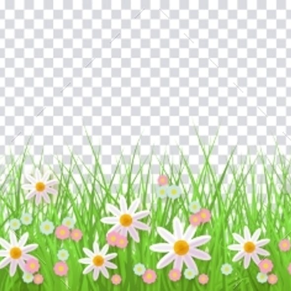 Spring Border with Green Grass and Flowers