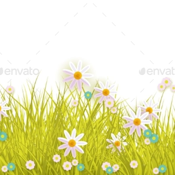 Spring Grass and Flowers Border on White