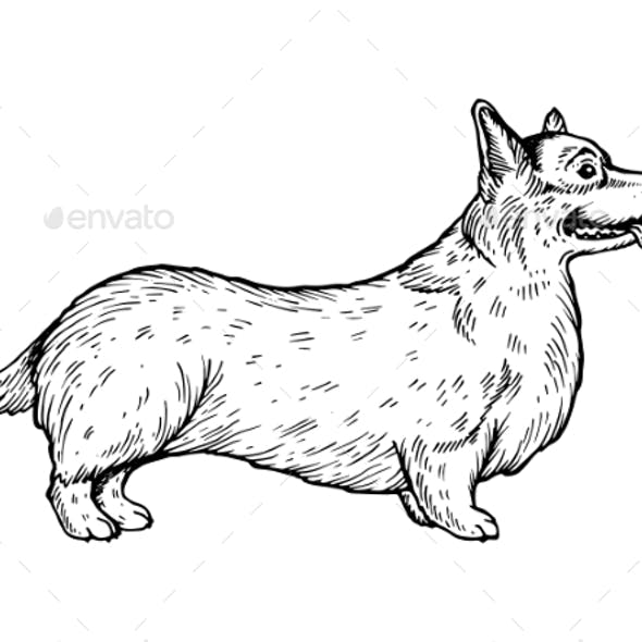 Welsh Corgi Dog Engraving Vector Illustration
