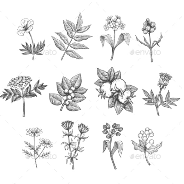 Vector Line Art Plants