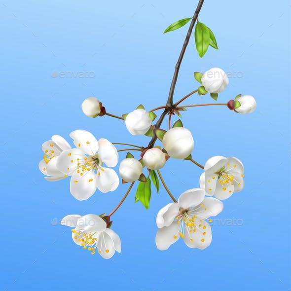 Spring Blooming Branch