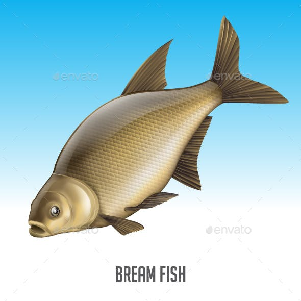 Bream Fish Vector Illustration