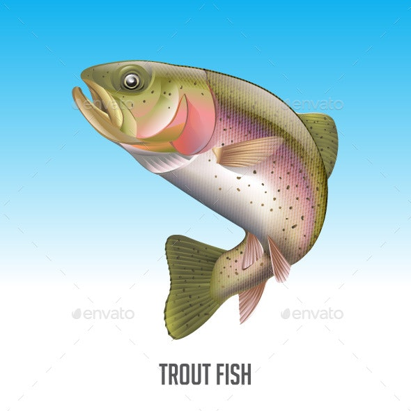 Trout Fish Vector Illustration - Animals Characters