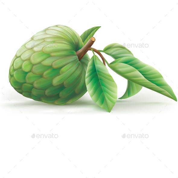 Annona Cherimola Fruit with Leaves