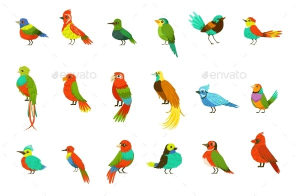 Exotic Birds From Jungle Rain Forest Set