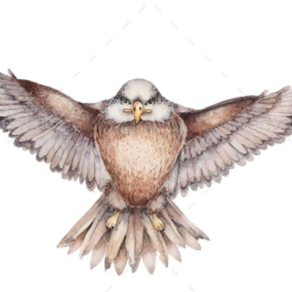 Hand Drawn Flying Eagle