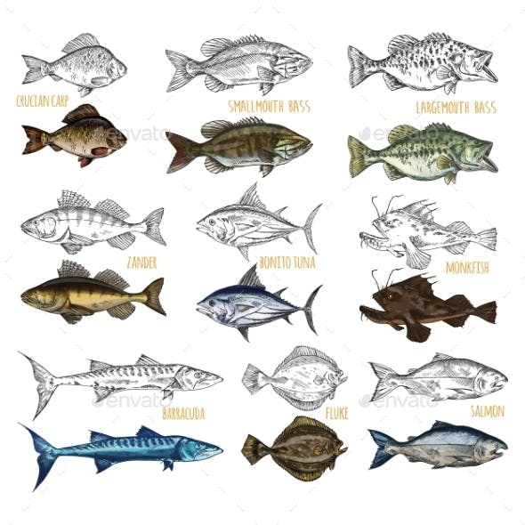 Side View on Isolated Fish Catch Sketches