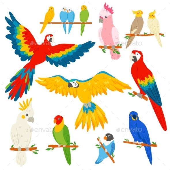 Parrot Vector Parrotry Character and Tropical Bird