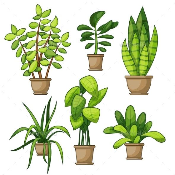 Set Of Different House Plants - Flowers & Plants Nature