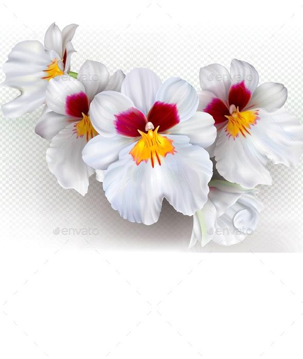 Miltoniopsis Herralexander Flowers - Flowers & Plants Nature