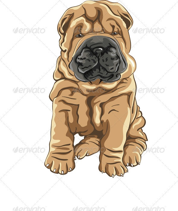 Vector Cute Red Shar Pei Dog Puppy Smiles - Animals Characters