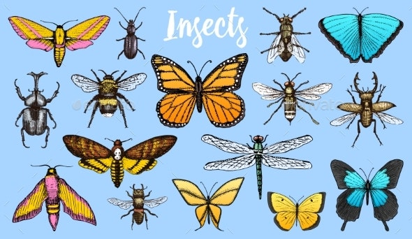 Different Insects Set - Animals Characters