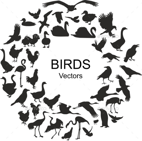 Collection of Silhouettes of Different Bird Species - Animals Characters