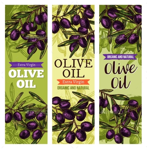 Vector Olives Bunch Sketch Banners for Olive Oil - Food Objects