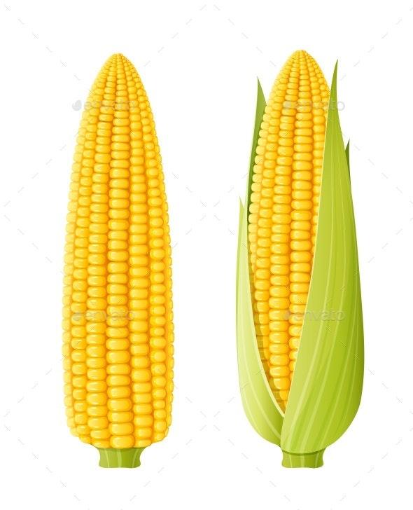 Corn Cob - Food Objects