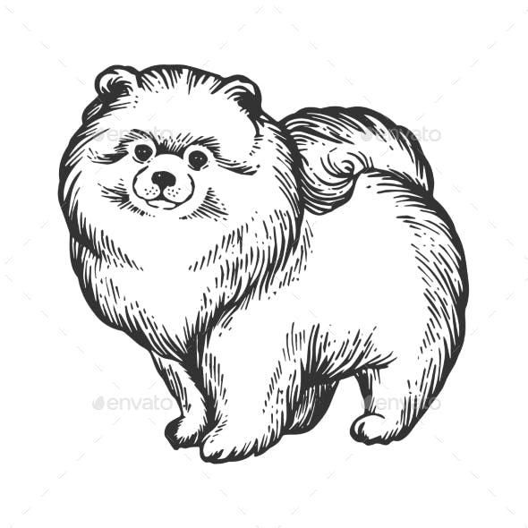 Spitz Dog Animal Engraving Vector Illustration