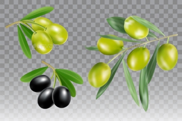 Black and Green Olive Branch Vector Icon Set - Food Objects