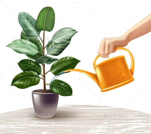 Watering Ficus Realistic Illustration - Flowers & Plants Nature