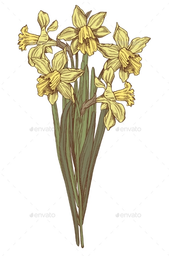 Vector Hand Drawn Daffodils Illustration - Flowers & Plants Nature
